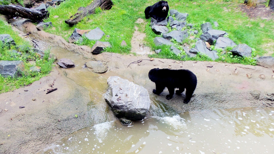 zoo-duisburg-bild-2@05x